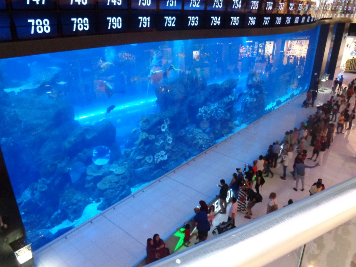 Aquarium inside the mall... you can go inside the tank w the fish and sharks!