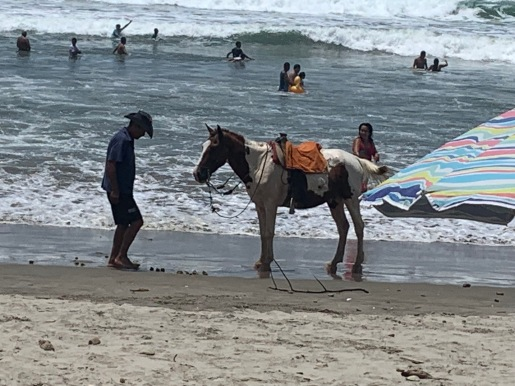 Wanted to ride this horse but he stayed busy picking up passengers.